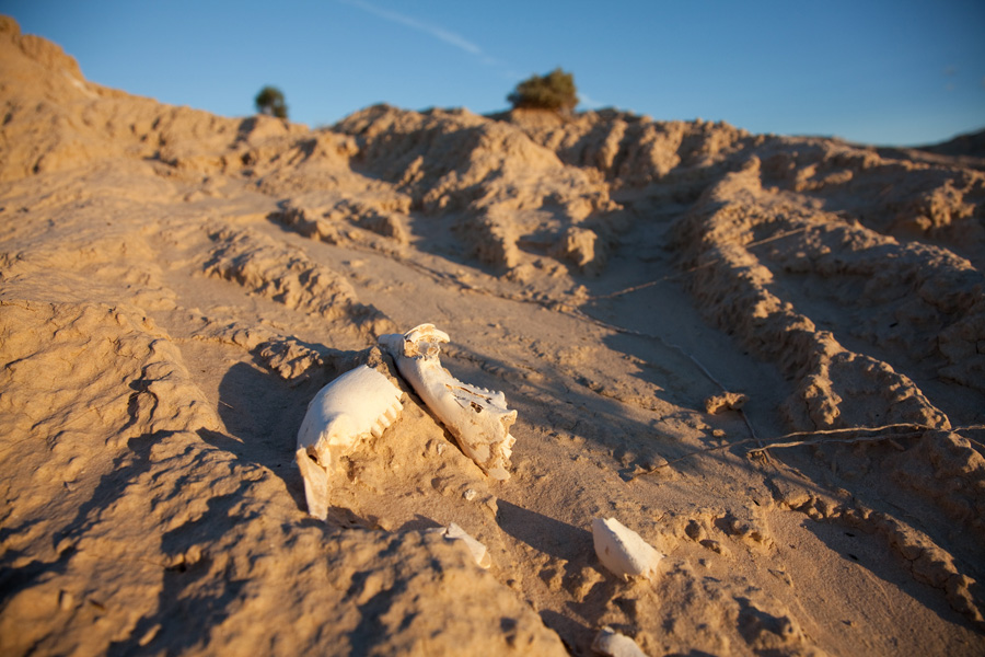skeletal remains of the mungo man Pleistocene man in australia: age and significance of the mungo skeleton  mungo iii skeletal remains  australia's oldest human remains, found at lake mungo.