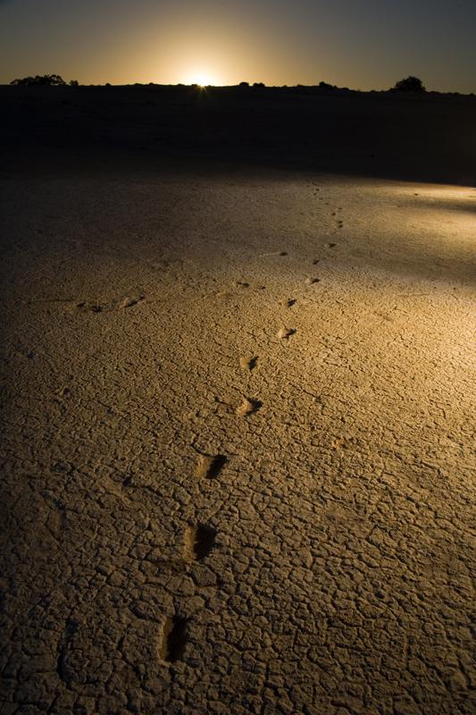 ancient footprints share mungo culture visit mungo national park