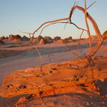 An old fencepost on the Mungo lunette reveals some erosion has been very recent. Photograph © Ian Brown